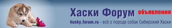 Щенки Хаски - Хаски Форум