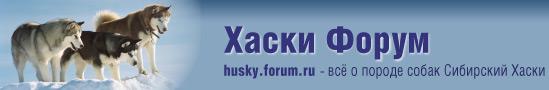 Сибирский Хаски - Хаски Форум